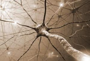 NeurOptimal Systeem te kopen